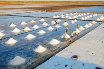 Việt Nam sẽ thiếu 300.000 tấn muối