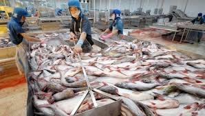 Lùi thời hạn áp dụng quy định liên quan cá tra