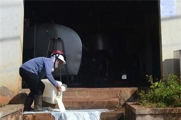 Nông dân đổ sữa bò trước trạm thu mua