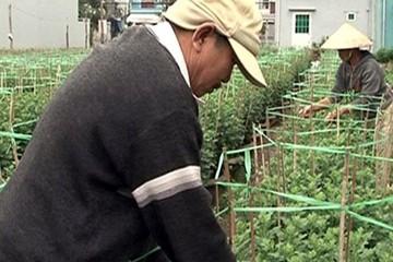 """Đà Nẵng: Nông dân làm giàu từ đất """"vàng"""" dự án treo"""