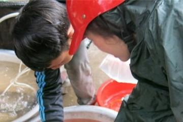 Cá chép cúng ông Táo rẻ bèo, còn 5.000 đồng/con