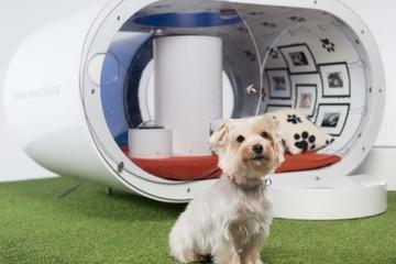 Ngôi nhà công nghệ cao dành cho cún cưng