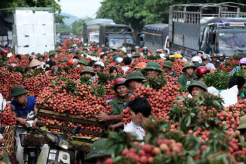 Trung Quốc tiêu thụ 50% rau quả xuất khẩu Việt Nam