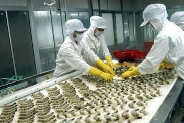 Đồng Euro giảm mạnh, thêm bất lợi cho xuất khẩu thủy sản của Việt Nam