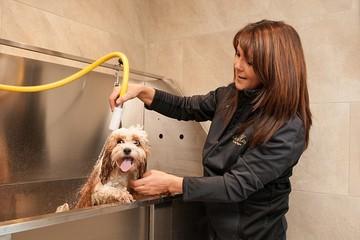 Khách sạn 5 sao dành cho cún cưng đầu tiên ở Scotland