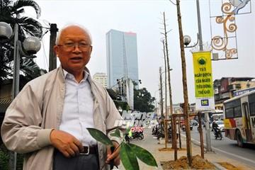 Cây xanh vừa được trồng thay thế tại Hà Nội: Chắc chắn là cây mỡ