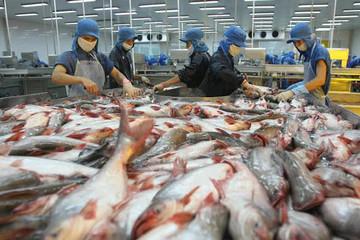 Sản lượng cá tra quý I đạt 182 nghìn tấn, giảm 10%