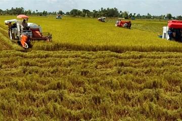 'Chơi sòng phẳng' với DN: Nông dân cũng phải chuyên nghiệp