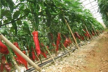 Nông sản Việt Nam ra thế giới: Đường rộng thênh thang