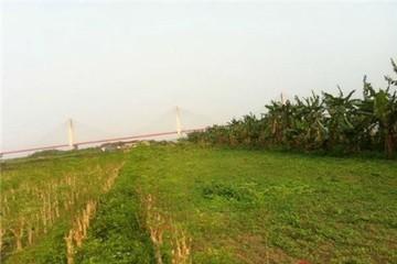 Chuyện lạ: Dịch vụ cho thuê đất trồng rau sạch ở Hà Nội