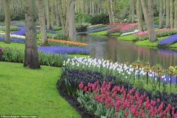 Đắm mình trong xứ sở các loài hoa của 5 vườn hoa đẹp nhất thế giới