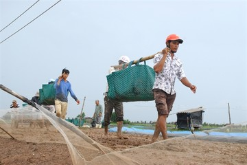 Vẫn lo an toàn thực phẩm cho nông sản xuất khẩu