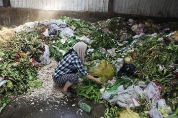 Thế giới đang lãng phí 1,3 tỷ tấn lương thực hàng năm