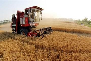 Rủi ro tự cung tự cấp của nông nghiệp Trung Quốc