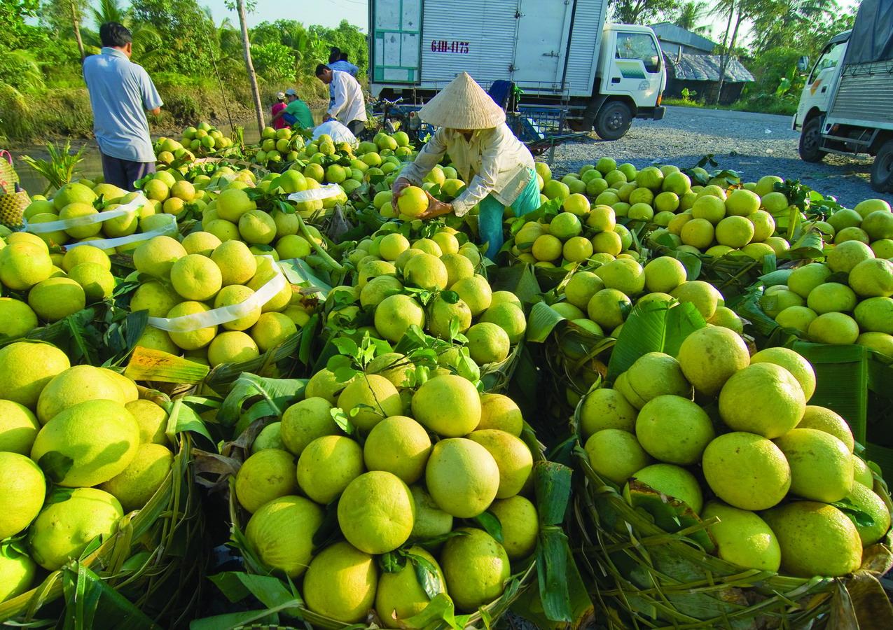 Đầu tư nông nghiệp: Nội hào hứng, ngoại dè dặt