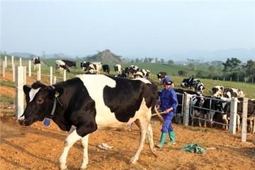 Thống Nhất tăng vốn khủng, mơ về nông nghiệp và hàng tiêu dùng