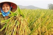 PAN tiếp tục mua cổ phần, tăng sở hữu tại Vinaseed lên 62,86%