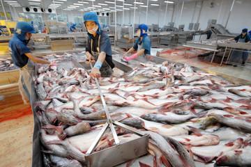 Xuất khẩu cá tra sang Mỹ vẫn gặp bất lợi