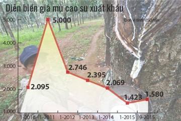 Giá cao su lao dốc: Trồng nhiều, lỗ nặng, chặt bỏ