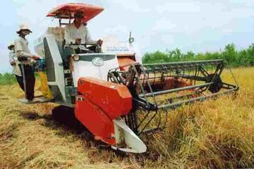 El Nino có thể làm giá gạo toàn cầu tăng mạnh