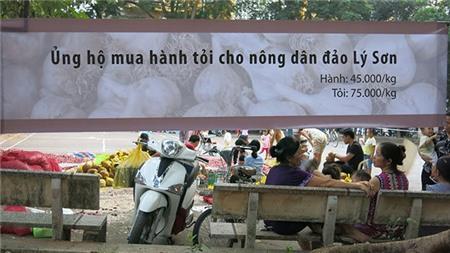 Tỏi Lý Sơn cháy hàng lấy đâu 300 tấn ế ở Hà Nội?