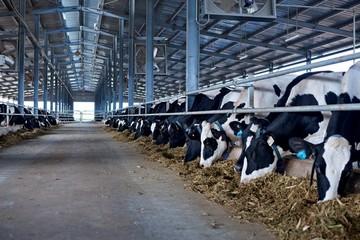 HNG: 75% doanh thu đến từ bán bò, lãi quý III hơn 394 tỷ đồng