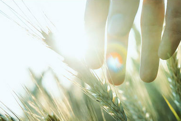 PAN: M&A các công ty nông nghiệp, lợi nhuận quý III tăng trưởng ngoạn mục