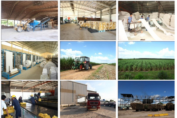 IPO Mía đường Tây Ninh: SBT và BHS sẽ trở thành cổ đông chiến lược