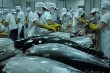 Cá ngừ Việt Nam nhập khẩu vào Mỹ bị kiểm tra 100%