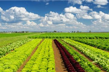 Tập đoàn PAN đã hoàn tất tăng sở hữu Vinaseed lên 75%
