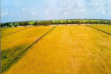 VinEco hợp tác với công ty Trung An ra mắt sản phẩm gạo sạch