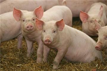 2 'bảo bối' giúp chăn nuôi thoát gọng kìm TPP