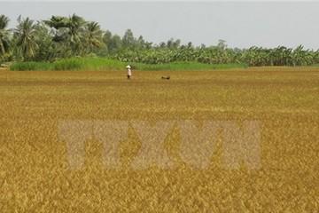Nhọc nhằn đối phó với tình trạng khô hạn khốc liệt tại ĐBSCL