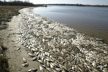 [Video Clip] Những nguyên nhân khiến cá biển chết hàng loạt
