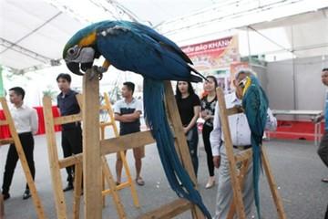 Dân chơi Hà Nội bỏ hàng nghìn USD sở hữu vẹt đuôi dài