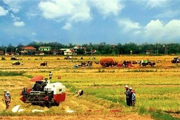 """Doanh nghiệp nông nghiệp """"đói"""" đất"""