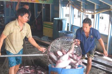 Kiểm tra 100% cá tra xuất sang Mỹ