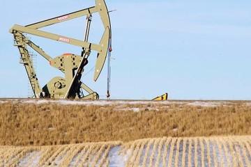 Giá dầu vẫn tăng sau khi vụ đảo chính tại Thổ Nhĩ Kỳ lắng xuống
