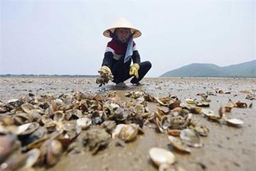 Những khoản thu lạ lùng ở Việt Nam