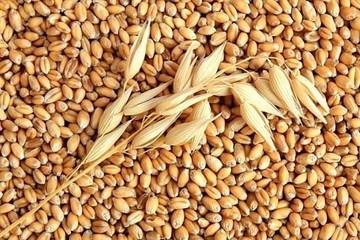 Giá lúa mì thấp nhất 10 năm, thị trường Australia hấp dẫn nhà nhập khẩu Châu Á