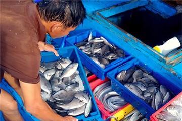 Hà Tĩnh sẽ 'niêm yết' 154 loại hải sản không nên ăn ở chợ cá