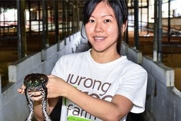 'Công chúa ếch' của Singapore