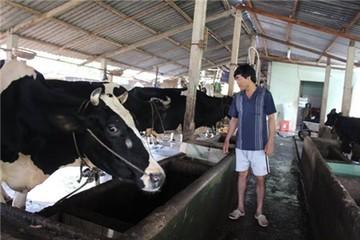 Bán hết bò vẫn chưa đòi được tiền bán sữa