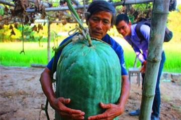 Ngôi làng chuyên trồng bí đao 'khổng lồ'