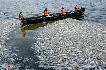 Bộ Công an đang điều tra vụ cá chết tại hồ Tây