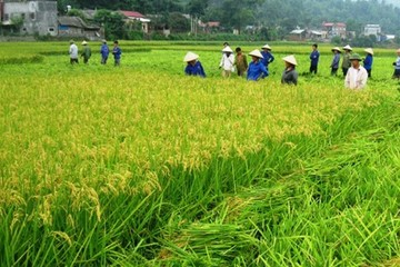 Chính phủ được đề nghị mạnh tay thu hồi đất nông nghiệp lãng phí
