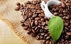 Giá cà phê trong nước lên đỉnh 5 năm