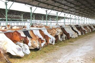 HAGL Agrico: Lỗ 643 tỷ 9 tháng, tài sản dở dang dài hạn chiếm 43% tổng tài sản