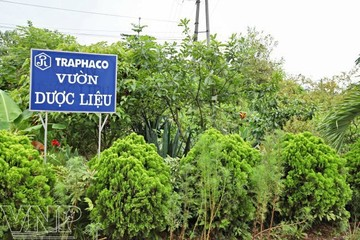 Traphaco sẽ thoái toàn bộ vốn tại Dược và Vật tư Y tế Thái Nguyên