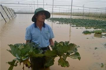 Tiền tỷ trôi theo lũ ở vùng trồng rau lớn nhất nước